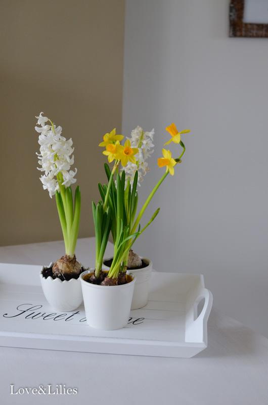 darf ich vorstellen love lilies. Black Bedroom Furniture Sets. Home Design Ideas