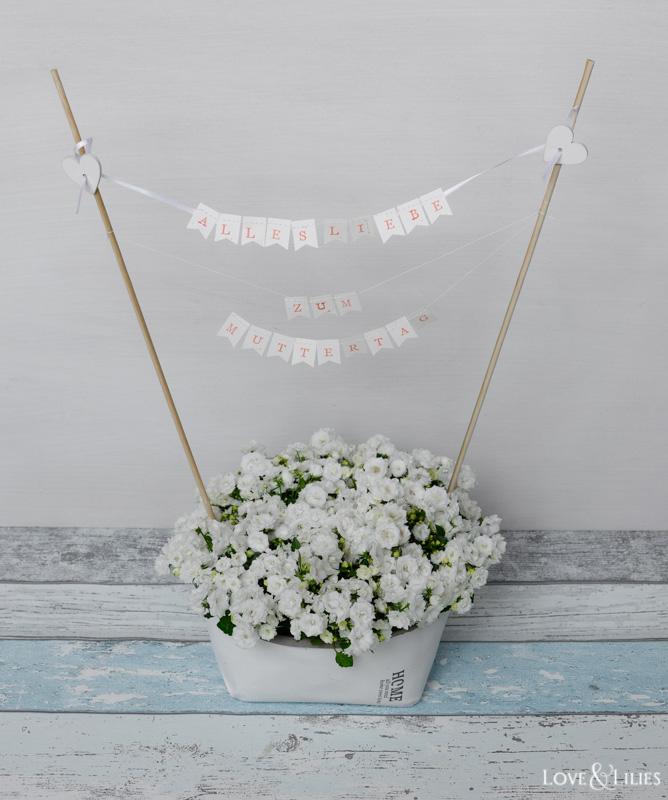 LoveAndLilies.de // Wunderschöne Campanula 'White Wonder' zum Muttertag mit Minigirlande
