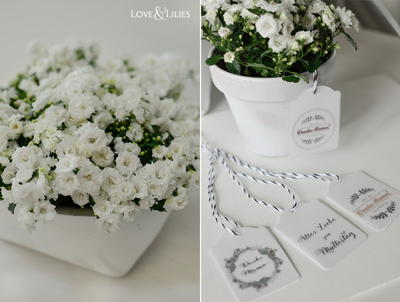 LoveAndLilies.de // Freebie Geschenkanhänger Tags zum Muttertag und wunderschöne Mini-Glockenblumen namens Campanula 'White Wonder'
