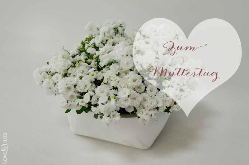 LoveAndLilies.de // Zum Muttertag. Wunderschöne Mini-Glockenblumen namens Campanula 'White Wonder'